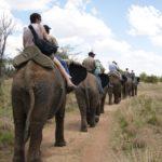 Adventures with elephants Safari