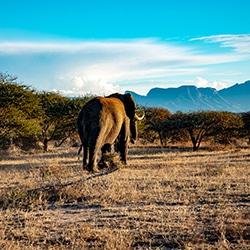 Adventures with Elephants Tour