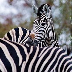 Pilanesberg Safari Day Tour